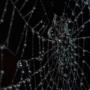 Sticky spider's web